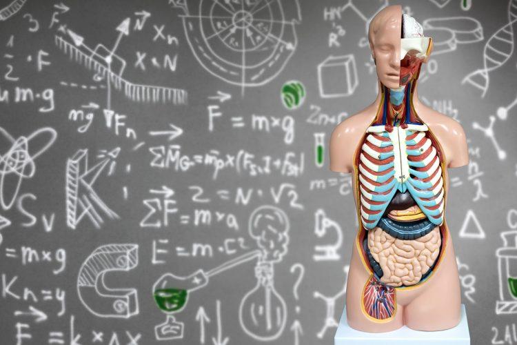 Osteopatia Albo. Corso sul diaframma