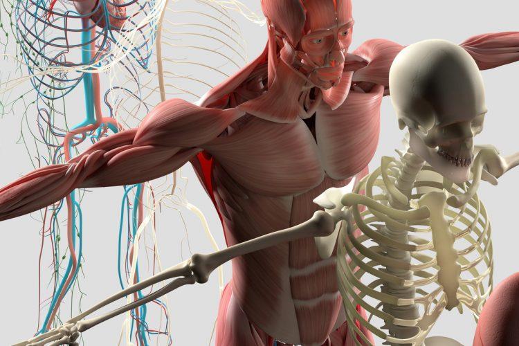 corso la fascia, osteopatia albo