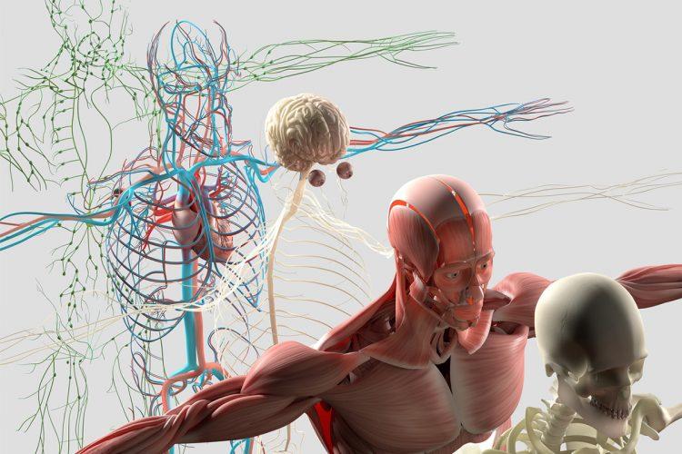 Osteopatia Albo. Corso di formazione sui nervi cranici