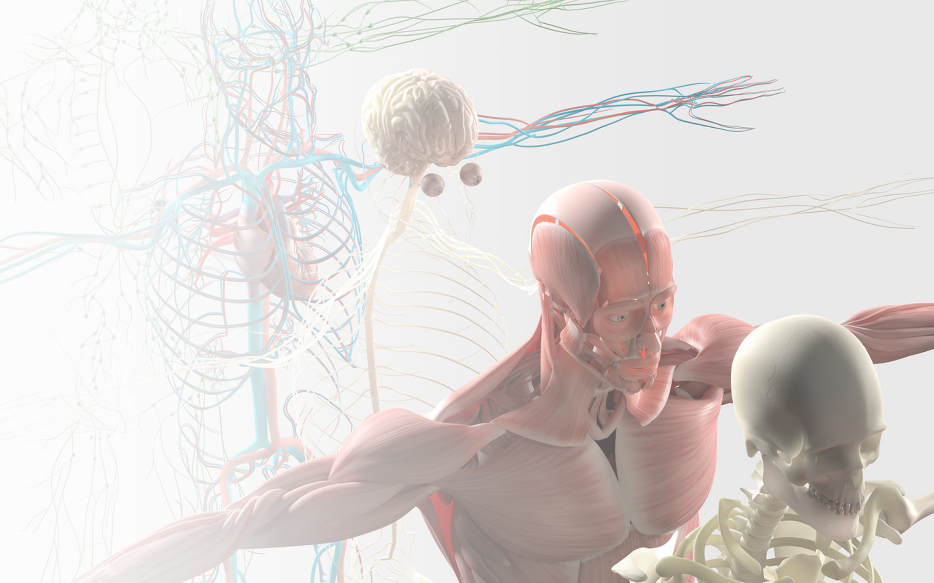 Osteopatia Albo. Corsi di Formazione Continua